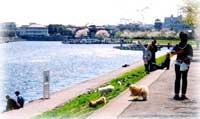 環境に配慮した緩傾斜型防潮堤